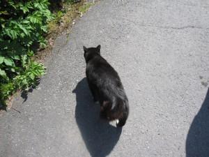 ネコも散歩