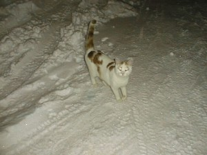 雪上でにゃ~